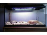Aquarium or Reptile Home