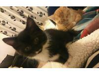 Kittens ready on 27th October