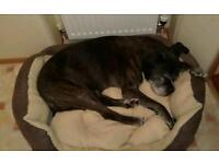 Mature couple seek pet friendly rental property within 5 miles of Standish Wigan