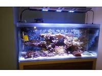 Fluval M90 Marine Tank And Stand