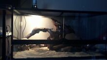 Reptile tank for sale Chester Hill Bankstown Area Preview