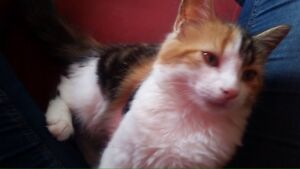 chatte perdue a LaSalle