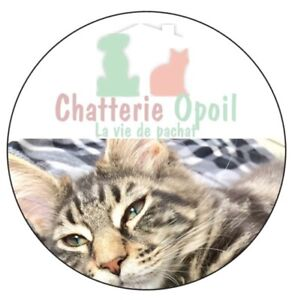 Pension, spa, garderie, chatterie animaux domestiques