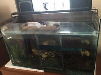 3 Chamber Glass Fish Tank
