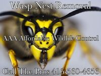 Wasp Nest Removal Toronto - Wasp & Bird Nest Removal