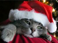 *MEOWY XMAS DEALS* 1 Bd -Utilities Included -West End Adult BldG