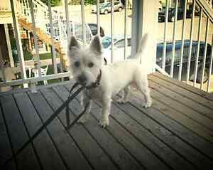 Working Family with neutered/house trained small dog need home.
