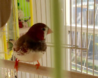 Cute Birdie with a Comphy Home