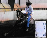 Rodeo Placing Barrel Horse for Sale