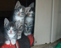 Entertaining and Adorable Kittens