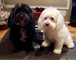 Going away on winter vacation and need pet sitter? Comox / Courtenay / Cumberland Comox Valley Area image 1