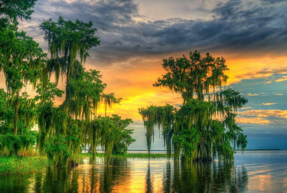1/2 AC Lot, Lake Placid, Short Drive To Tampa, Florida, Bid On Payment - $177.50