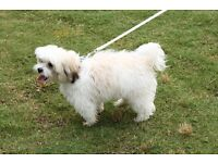 Small dog evening walking - Totton, Calmore, Ashurst & Romsey areas