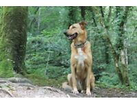 Dog walking, dog sitting, dog boarding, dog daycare, pet sitting in Plymouth and surrounding areas