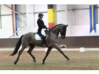 Dressage Training | Full Training Livery | Livery Services | Boot Camps | Clinics | Kent