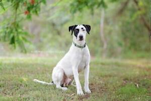 Bonn - male dog - is looking for his forever home