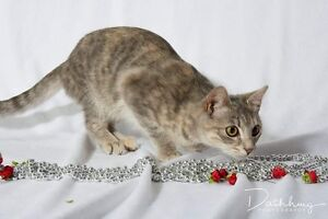 Angelica needs a home **ADOPTION FEE REDUCED** Ashcroft Liverpool Area Preview