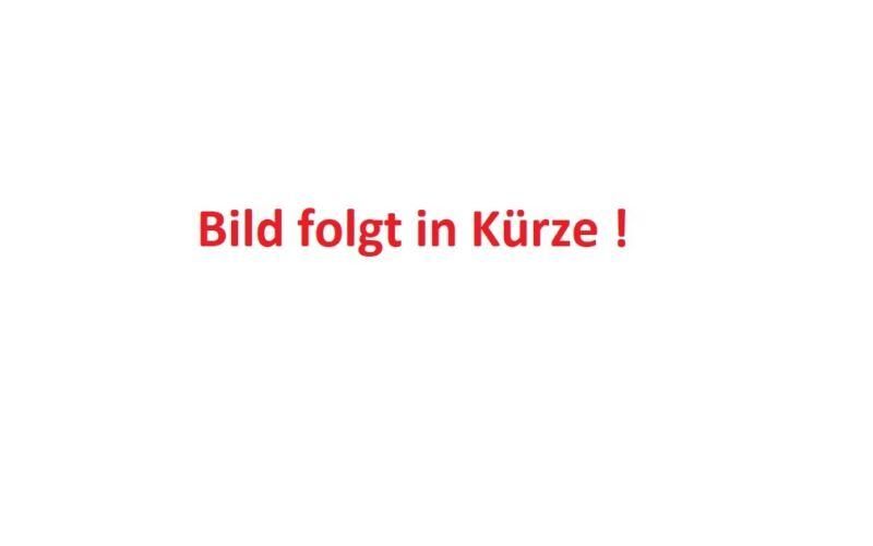 Spiere Kolbenspiere Spiraea billardii /'Triumphans/' 60-100 cm im Topf gewachsen