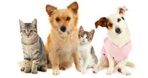 Dog/cat boarding services