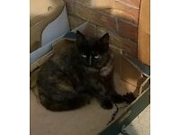 FEMALE KITTY NEEDS HOME FREE. At Collins Vets. i'm housing 2 old dolls, old boy, 3 yr boy n 6mth boy