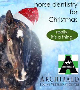 Horse Dentistry Christmas Pro Event only until Dec 31