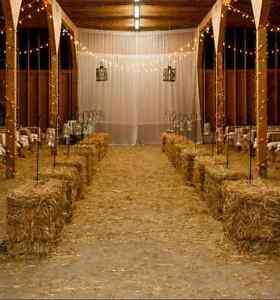 Golden straw bales for your wedding decor / special events! Kitchener / Waterloo Kitchener Area image 6