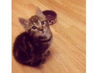 Lovely kittens for sale 🐱