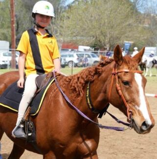 'Nikki' stockhorse mare Muswellbrook Muswellbrook Area Preview