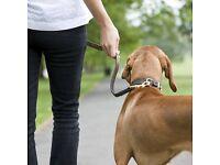 Friendly Dog Walker