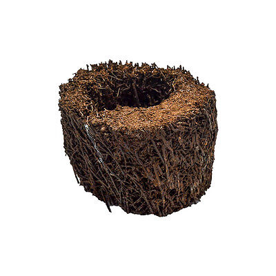 4  Tree Fern Pot  Great For Growing Ferns And Orchids In Terrarium Frog Epiphyte