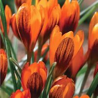 Save 30-70% - Perennial Blowout and Fall Planting Bulbs!