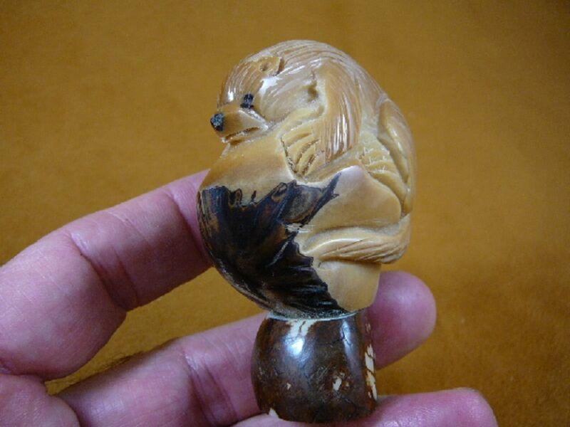 (TNE-OTT-338A) brown sea Otter Nutria TAGUA NUT Figurine Carving Vegetable ivory