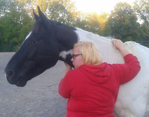 The Horse Medicine Collective Needs Your Help Peterborough Peterborough Area image 7