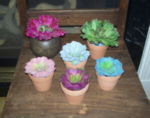 Realistic Succulent Cactus Potted Plants~for Reptiles