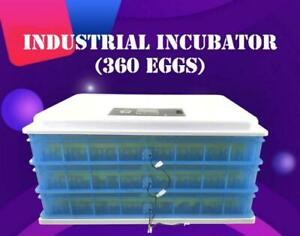 220V Industrial Incubator(360 eggs)251042