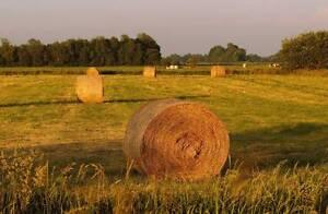 Round Bales of Hay - White Clover & Rhodes Grass Mix - $55 each Boyland Ipswich South Preview