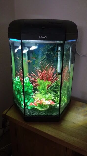 aquael hexagon 60 litre tropical aquarium in goole east. Black Bedroom Furniture Sets. Home Design Ideas