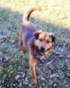 """Adult Male Dog - Shepherd: """"Highway"""""""