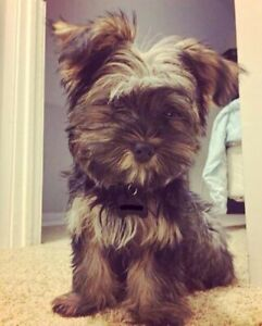 My Dog is Nuts-Looking for Advice