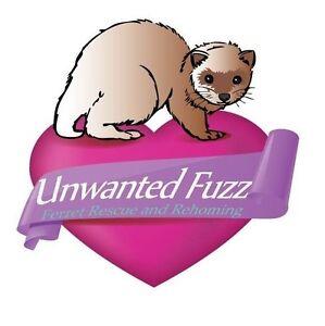 Unwanted Fuzz Ferret Rescue Creswick Hepburn Area Preview