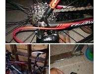 Men's Carbon Frame Bike