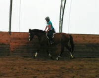 1/2 Lease 16.1-2 TB 4 yr old mare