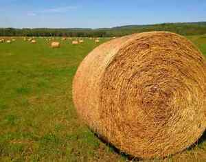 Organically grown Hay for Sale