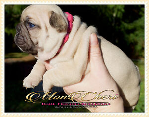 Registered Local Breeder