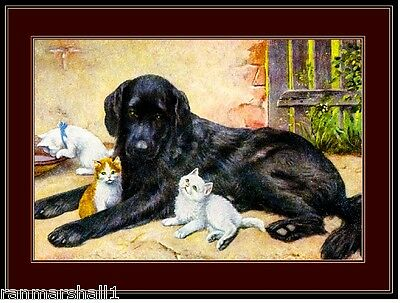 English Picture Print Labrador Retriever Dog Dogs Kitten Cat Cats Poster Art Cat Dog Art