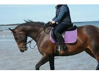 16.1 mare for PART LOAN