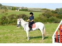 13'2 New Forest pony for sale