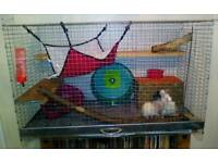 Rat cage and 2 male rats.