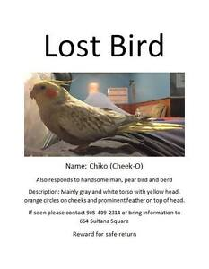 Please help bring Chiko home