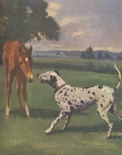 Dalmatian - Vintage Dog Print - 1970 W. Dennis